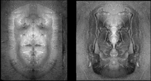 homonid face, leonine face